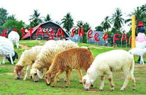 Какие фермы есть в Паттайе?