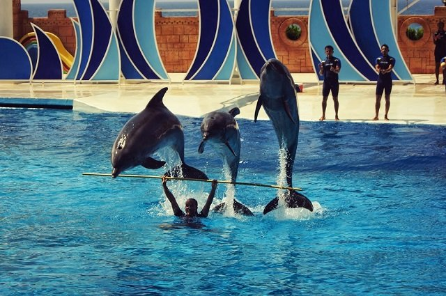 Дельфинарий в Алании
